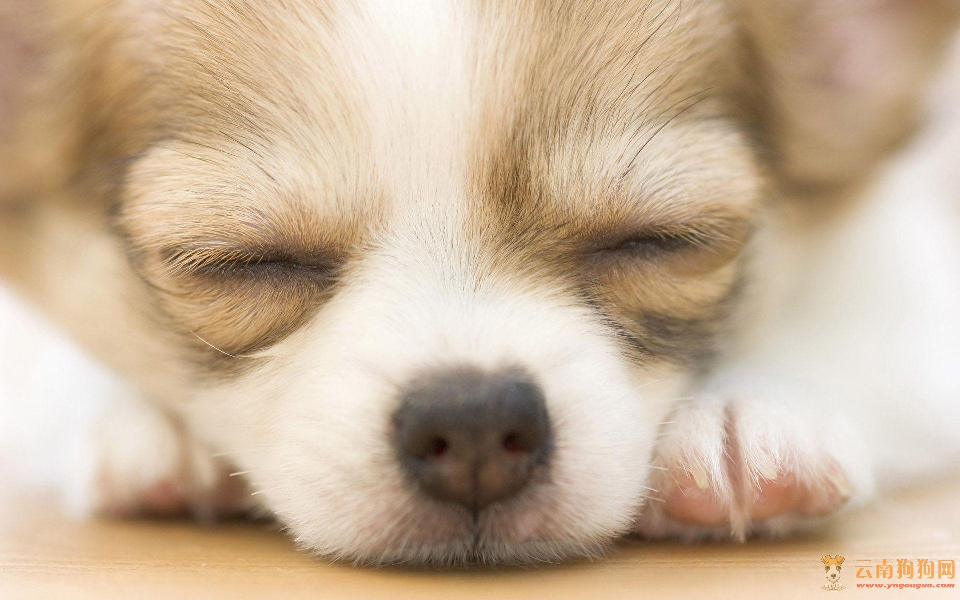 可爱小狗写真图片-狗狗欣赏